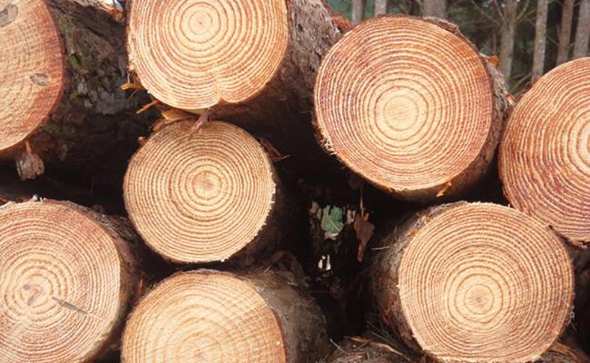 Древесина для мебельного щита